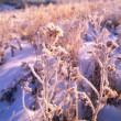 Foto de Stock  : Frost On Leaves