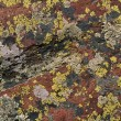 Stock Photo: Lichen Pattern On Boulder