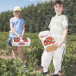 Boy And Girl Holding Baskets Of Strawberries — Stock Photo