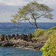 Tree On Shore — Stock Photo