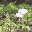 Foto Stock: Mushrooms