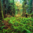 Stock Photo: Trees And Ferns In Forest