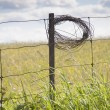 Role Of Wire On Fence Post — Stock Photo #31945237
