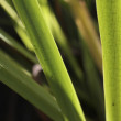 Close Up Of Plant Leaves — Stock Photo