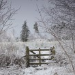 Winter Landscape With Trees And A Wooden Fence — Stock Photo