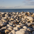 Rocky Shore — Stock Photo #31945727