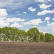 Row Of Trees In Field — Stock Photo