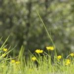 Wildflowers — Stock Photo