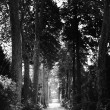 Straight Tree-Lined Pathway — Stock Photo