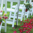 Path Of Rose Petals Behind A Row Of White Chairs — Stock Photo