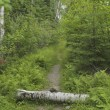 Log In Path, Lake Of The Woods, Ontario, Canada — Stock Photo