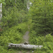 Stock Photo: Log In Path, Lake Of Woods, Ontario, Canada
