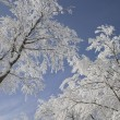 Snow Covered Trees — Stock Photo