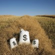 Bags Of Money On A Farm Field — Stock Photo