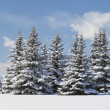 Snow-Covered Evergreens With Hikers In The Distance, Calgary, Alberta, Canada — Foto de Stock
