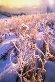 Frost On Leaves — Stockfoto