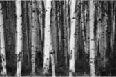 Floresta de árvores de folha caduca — Fotografia Stock