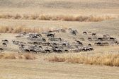 Herd Of Goats And Sheep In Dry Pasture Near Alhaurin De La Torre — Stock Photo
