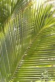 Palm Leaf, Maui, Hawaii, Usa — Stock Photo