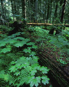 Ferns And Bushes On Forest Floor — 图库照片