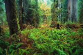 Trees And Ferns In Forest — Stock Photo