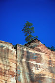 Tree On Cliff — Stock Photo