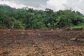 Tropical Forest Cleared By Machinery, Belize — Stock Photo
