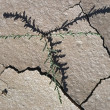 Shadow Of Small Desert Plant Fits With Cracks In Dried Mud — Stock Photo