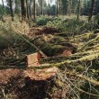 Stock fotografie: Stump And Slash In Logging Area