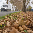 Autumn roadside — Stock Photo