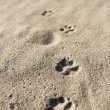 Dog's footprint — Stock Photo