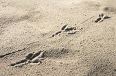Bird's footprint — Stock Photo