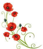 Poppies, çiçekler, yaz — Stok Vektör