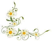 雏菊边框 — 图库矢量图片