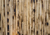Dry Bamboo Columns — Stock Photo