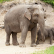 Elephants — Stock Photo #33664813