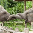 Elephants — Stock Photo #33665561