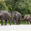 Elephants — Stock Photo #33666049