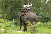 Elefantes — Fotografia Stock