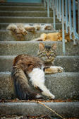 Three cats on the stairs — Stock Photo