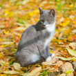 Cat in yellow leaves — Stock Photo