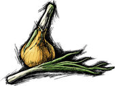 Sketch vector illustration of onion — 图库矢量图片
