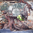 Ruin concrete wall with big tree root — Stock Photo #34341241
