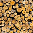 Section of log woods — Stock Photo