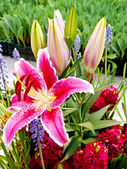Beautiful lilies and other flowers — Stock Photo