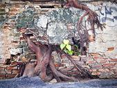毁了混凝土墙,树大根 — 图库照片