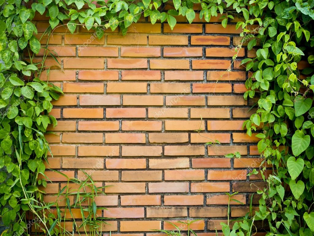 Green Leaf And Brick Wall Background Stock Photo