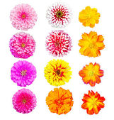 Collection of colorful head flower, fresh and natural — Stock Photo