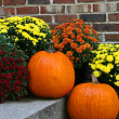 Pumpkins and Chrysanthemums — Stock Photo