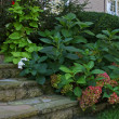 Stock Photo: Landscape plantings at Home